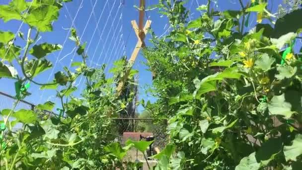 pohled zevnitř zahrada trellis