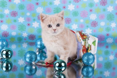 Scottish fold kitten and Christmas toys