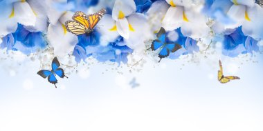 Amazing butterflies and flowers