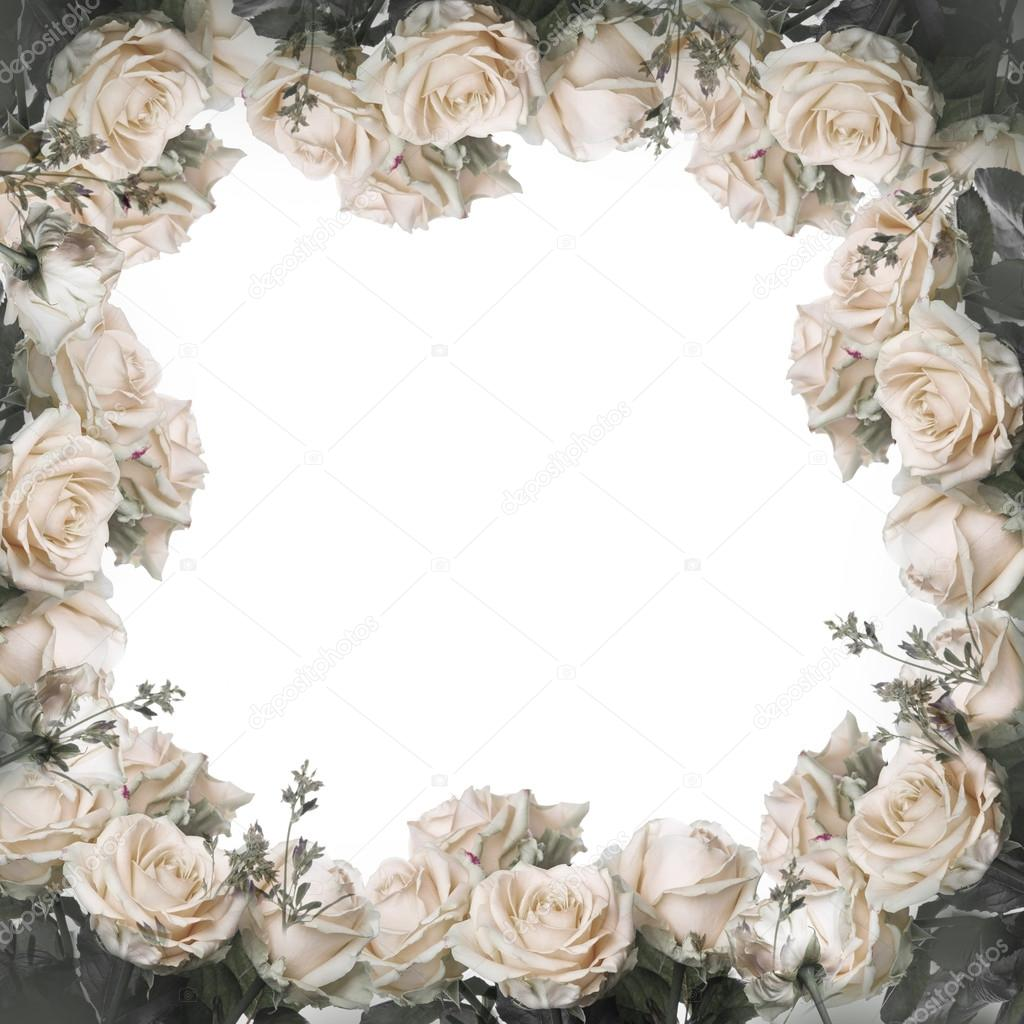 frame with white roses — Stock Photo © seqoya #127869744