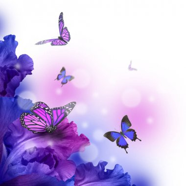 Amazing butterfly fairy of flowers