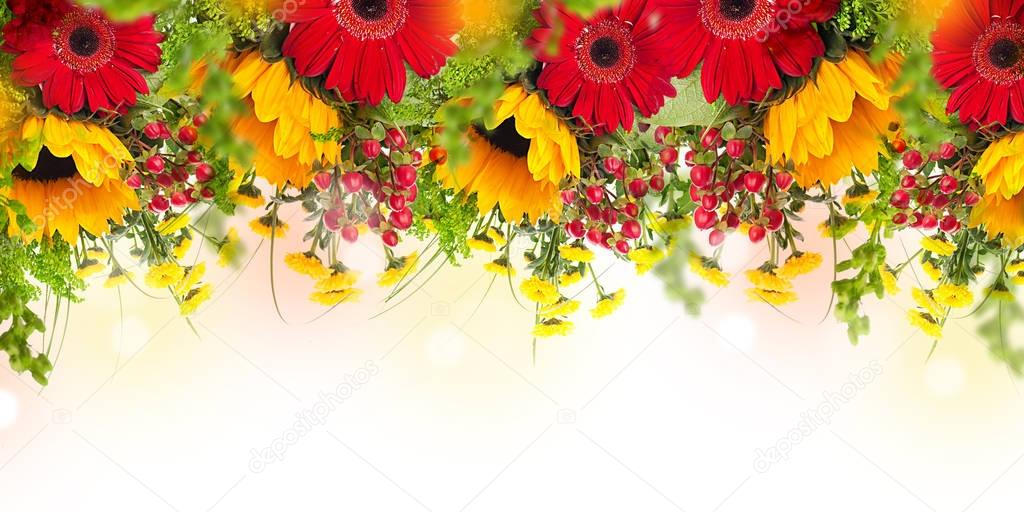 Amazing background with daisies and sunflowers