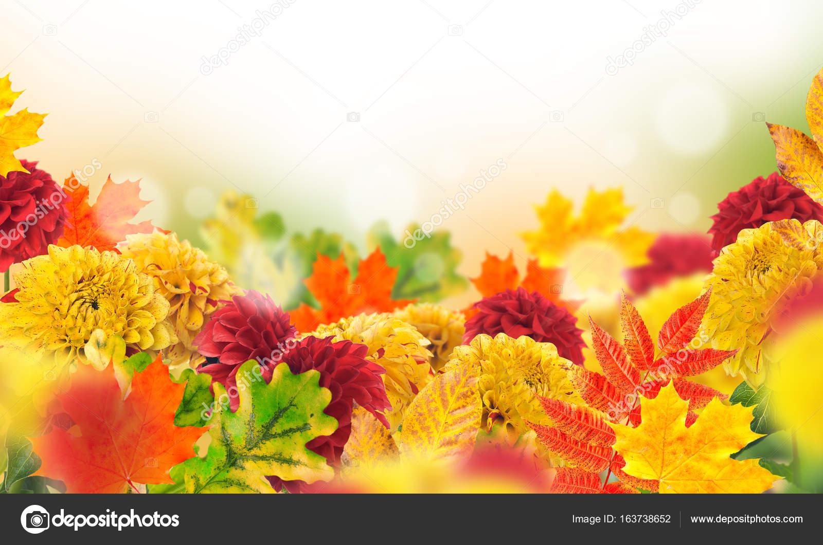 Wunderbar Herbstblumen Beste Wahl Und Blättern Auf Hellen Gelben Hintergrund Mit