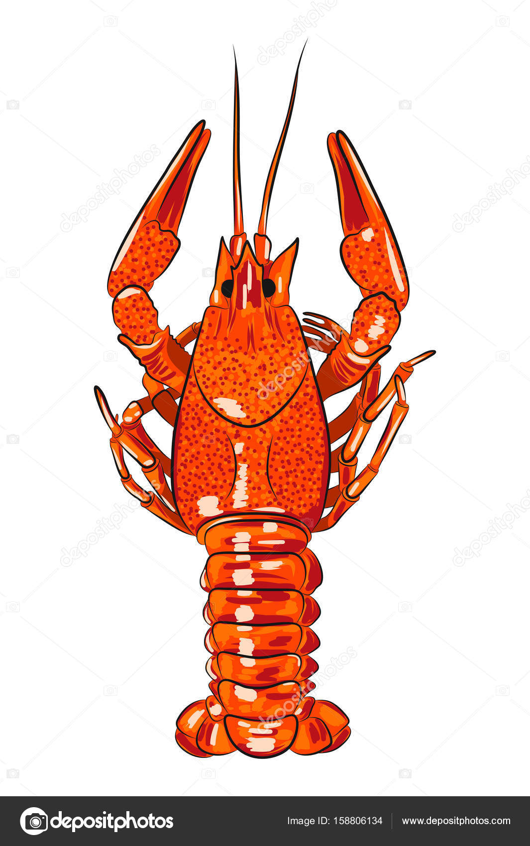 realistic glossy crawfish — Stock Vector © merrydolla #158806134