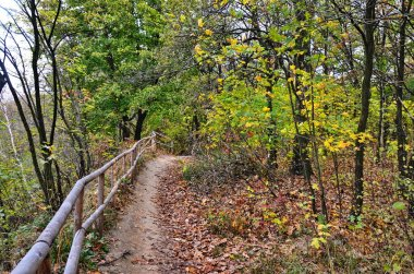 Ecological trail through in the fall forest.