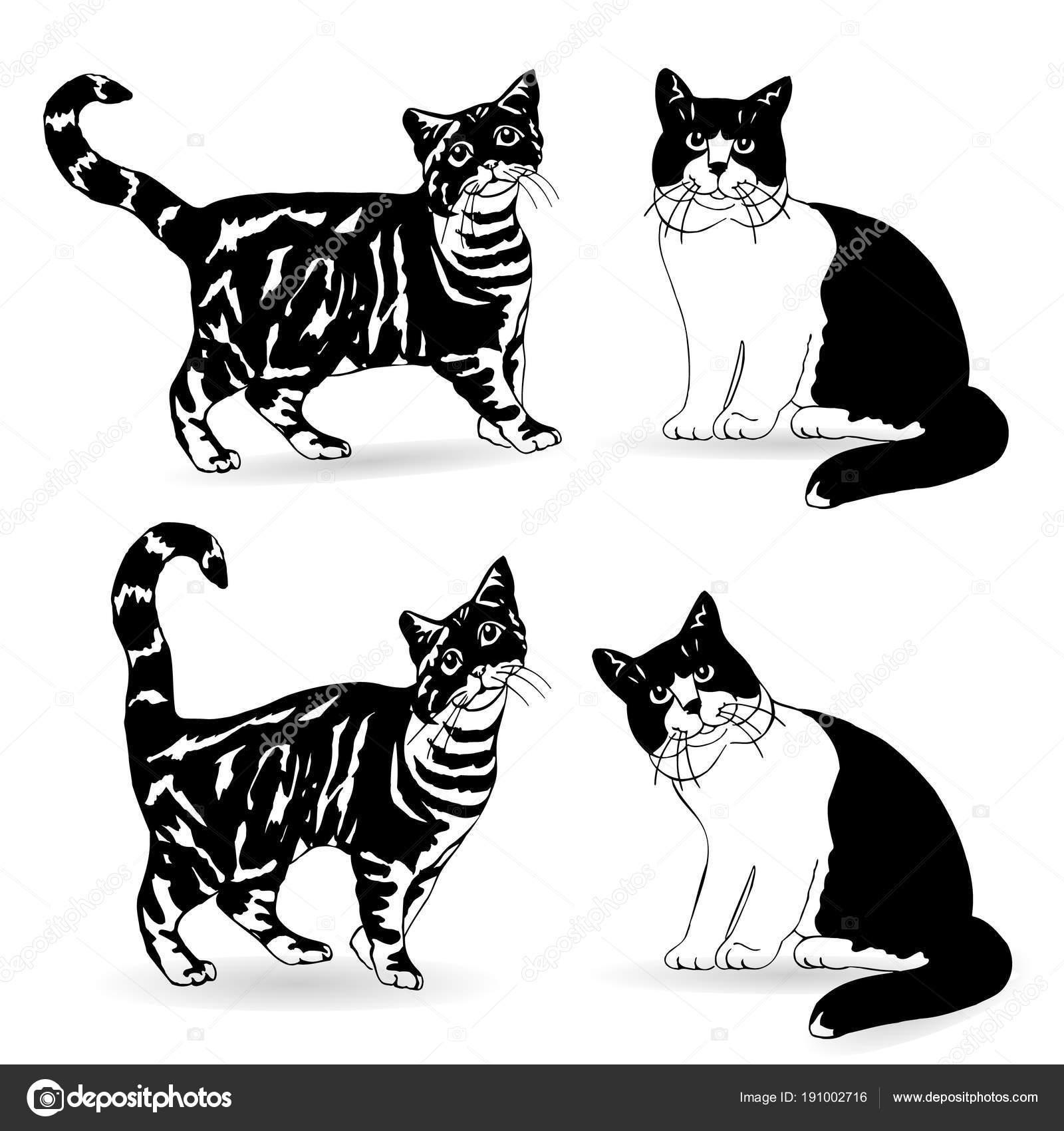 Dibujo Gato Negro Y Blanco Silueta Negra De La Colección De Gato