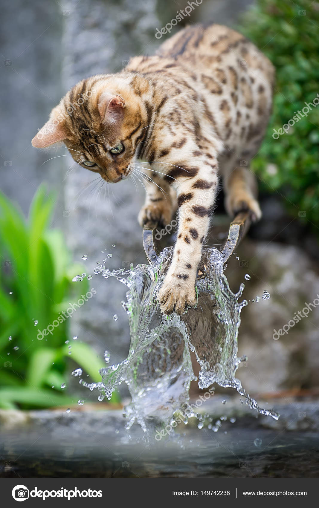 5916a7438b Bengal Kitten playing with Water — Stock Photo © krappweis  149742238