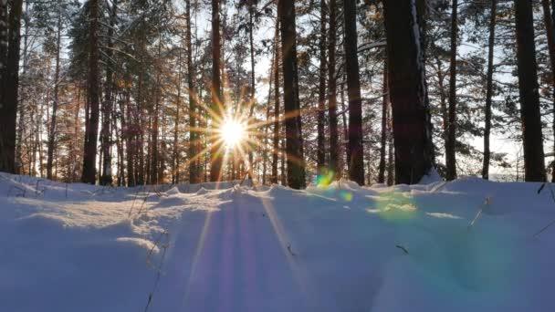 Kmeny stromů proti slunci