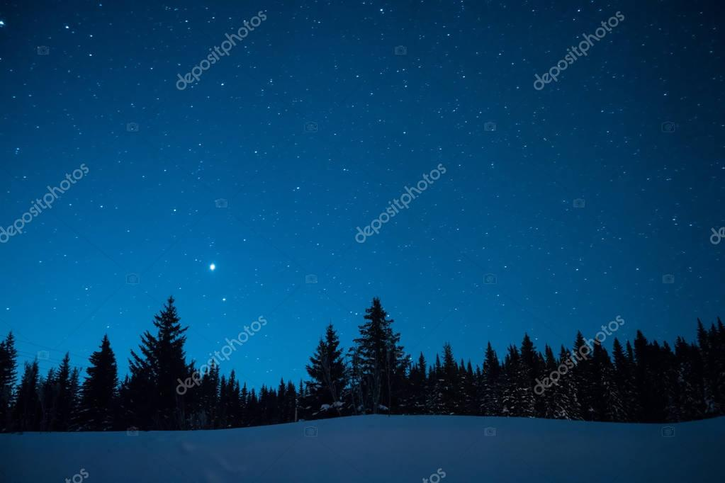 Christmas trees on the background of the starry winter sky. Prio