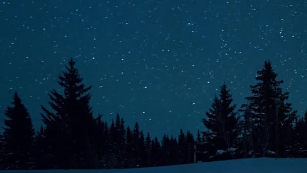 night view of beautiful starry sky,  fir trees and moon rise, video, ultraHD (4K)