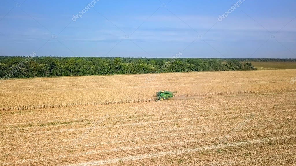 Russia, Krasnodar - August 30, 2017: Harvesting of corn. Harvester gather corn from the field. Russia