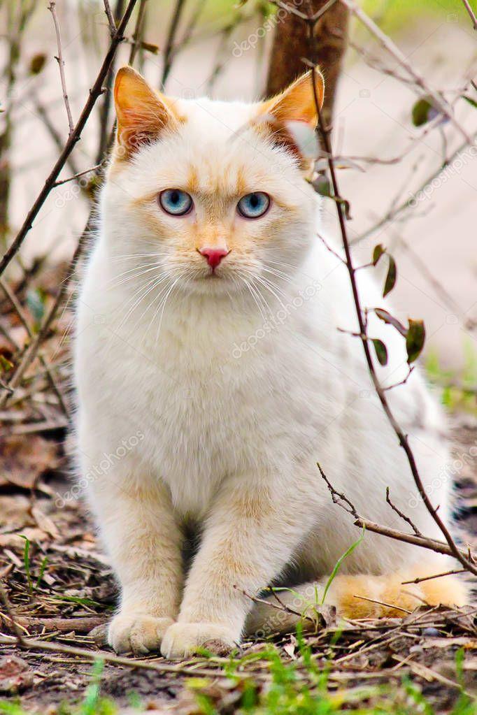Yard cats. selective focus.