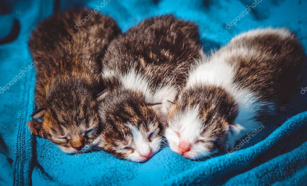 small kittens. selective focus.