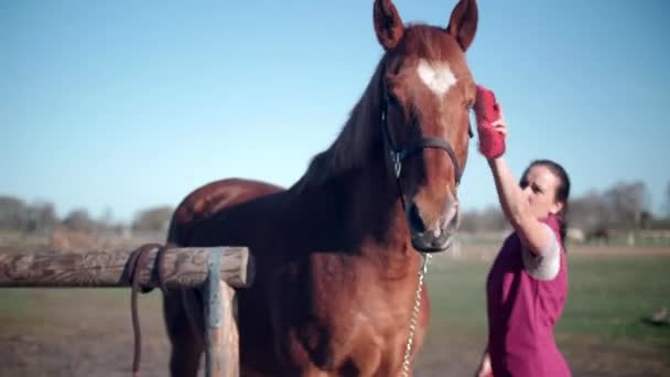 Young beautiful girl brushing and cleaning horse before riding outside 60 fps 4k
