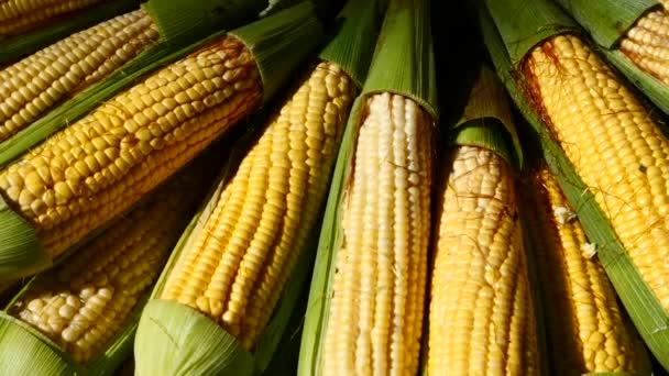 Detailní pohled na hromadu kukuřičné klasy na trhu stánku