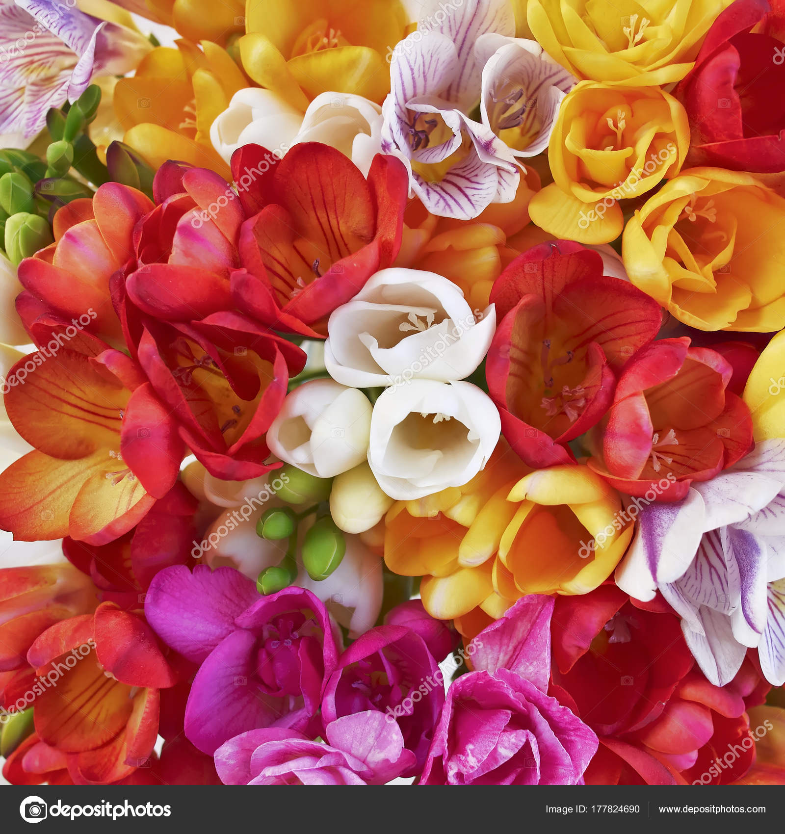 Colorful Freesia Flowers Bunch Top View Natural Background — Stock ...