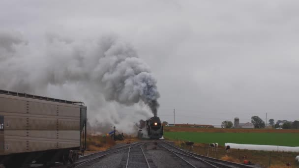 Head on View of a Steam Locomotive Pulling Freight Pulling into Yard with Cattle Watching also with Smoke and Steam on a Rainy Day