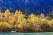 Fotografie Wasserfall im Herbst
