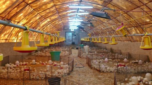 Farm for fattening turkeys