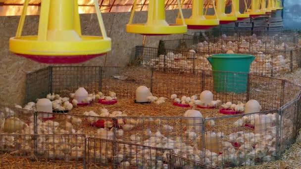 Farm for breeding poultry