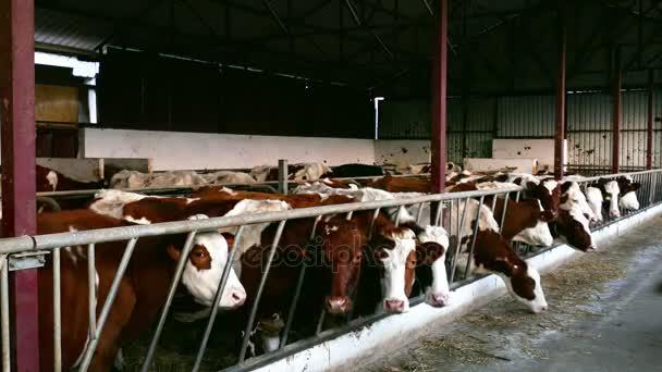 Farm für die Zucht von Milchkühen