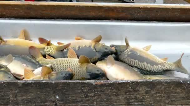 Válogatás a fogott hal