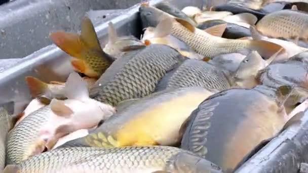 Klasifikace ulovených ryb v jezírku
