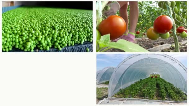Rostlinné výroby-Multi Screen / pěstování a produkce různých druhů zeleniny