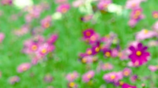 Gyönyörű virág a kertben Farm maszat háttér