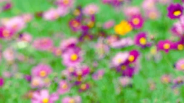 Beautiful Flower In Garden Farm Blur Background
