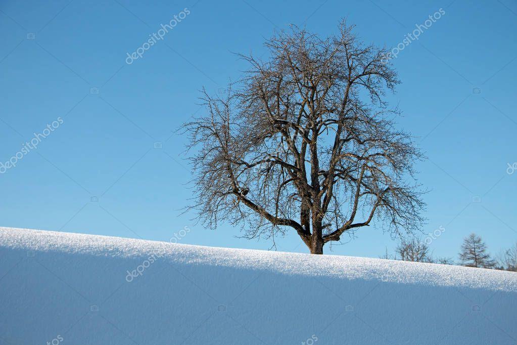 Tree winter background sky blue