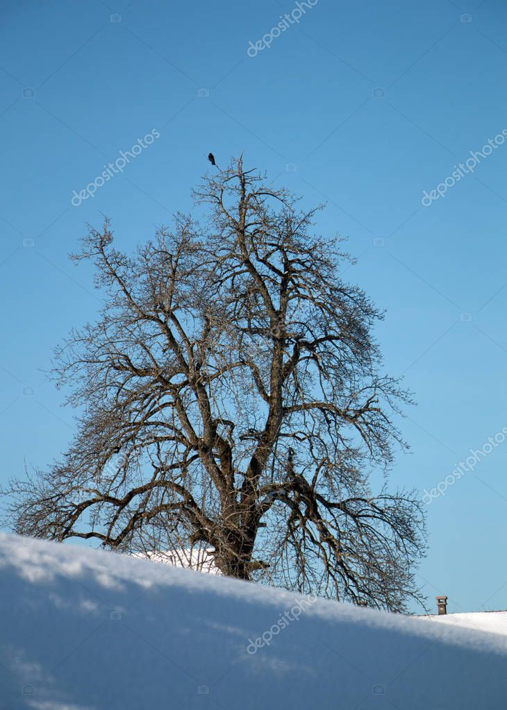 Raven bird tree in winter
