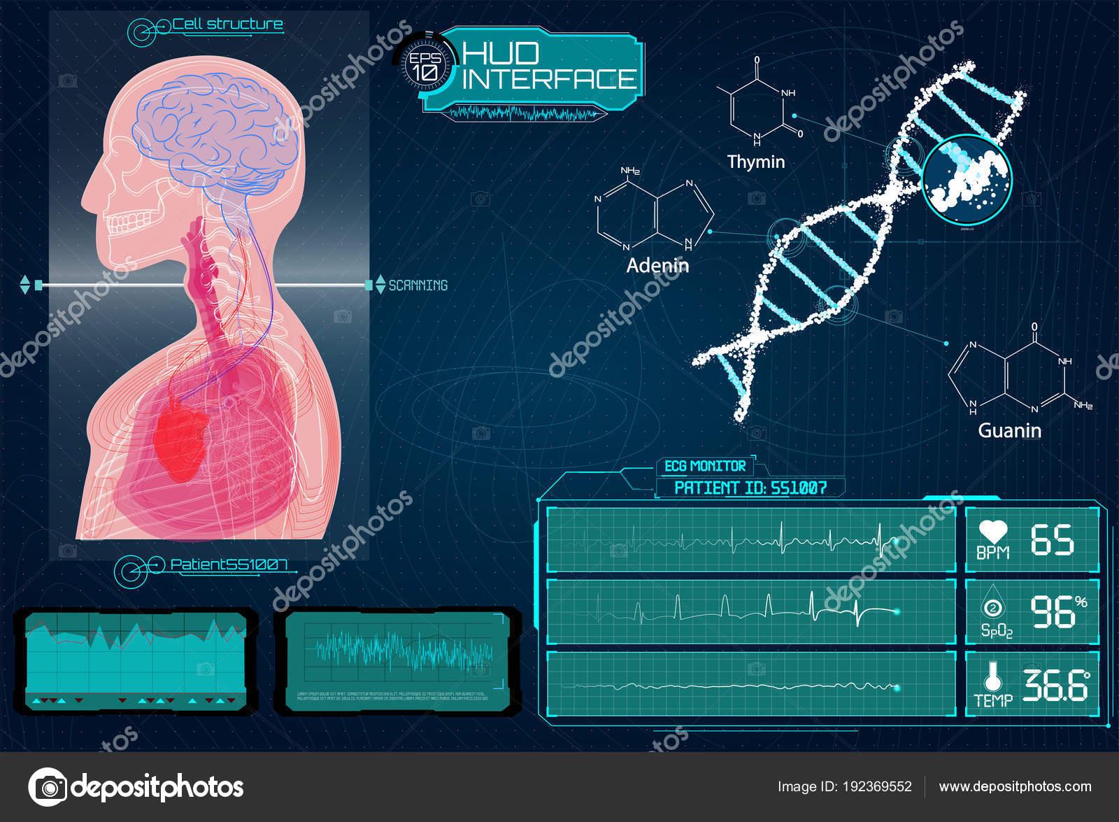 Futuristische medizinische Hud-Interface. Gehirn-Scan, Herz-Scan ...