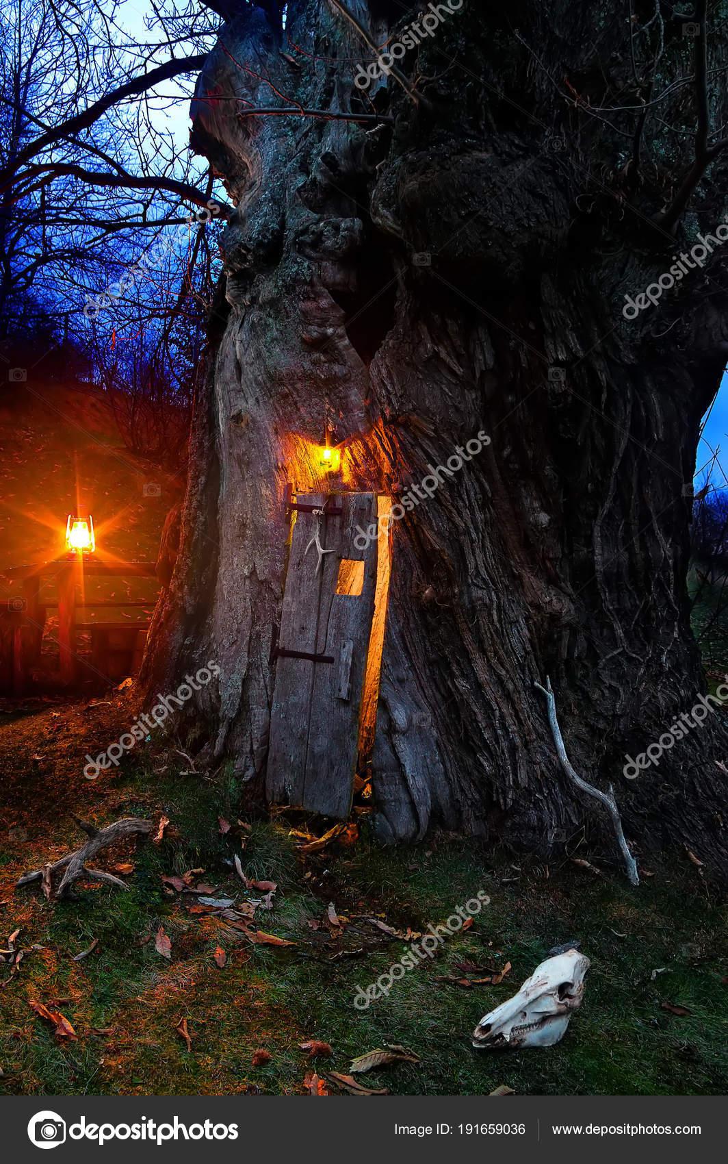 Casa Degli Elfi Questo Enorme Secolare Castagno Con Una