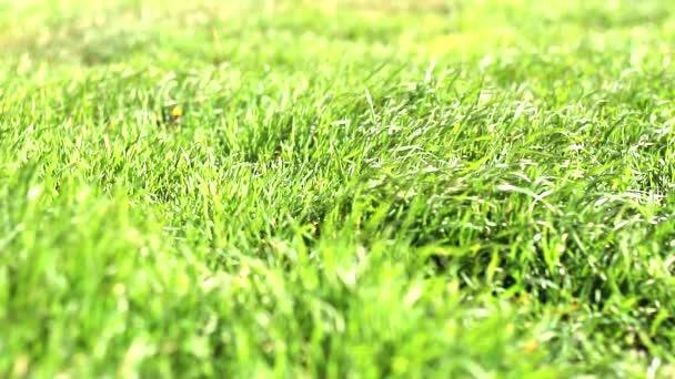 fű ringat a szélben