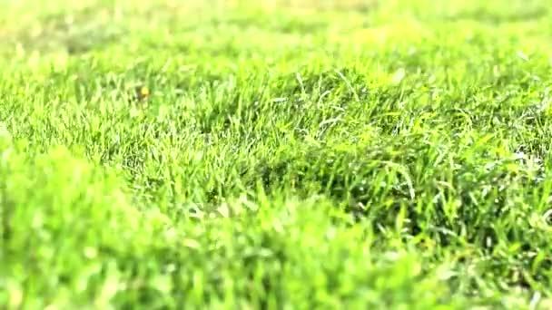 tráva se houpe ve větru