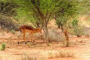 view of Antelope portrait