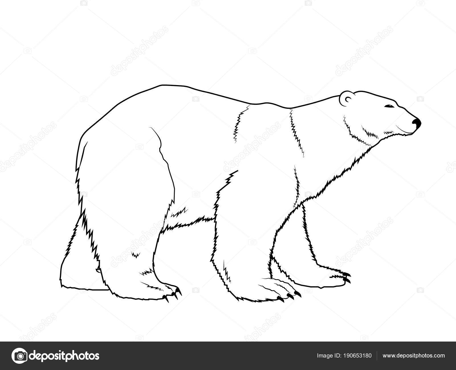 Hand Drawn Isolated Polar Bear Silhouette Outlined Coloring Book ...