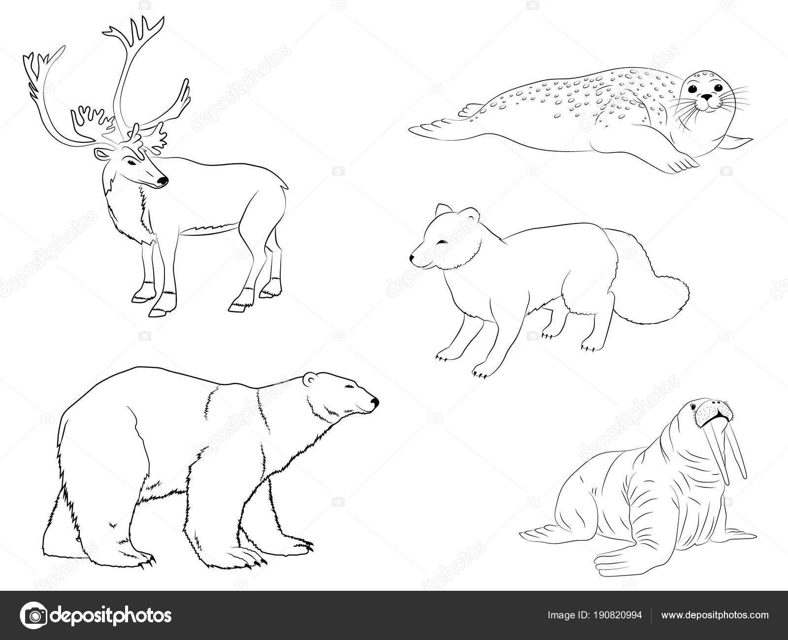 Polar Árticos Animales Colección Esquema Renos Mar Becerro Oso ...