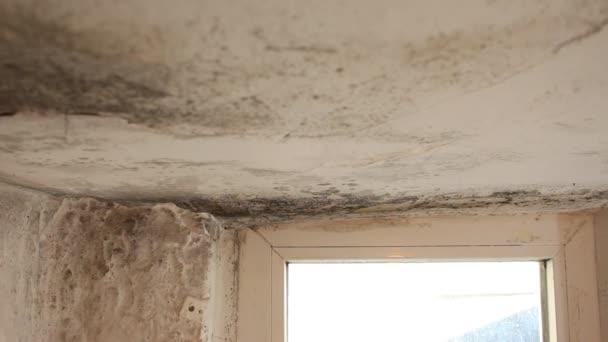 Schimmel an Wänden, Decke, Fenster im Haus. Schimmel im Keller.  Kondensation verursacht Schimmel