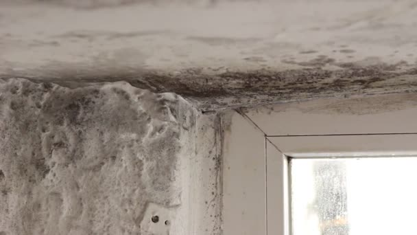 Apartment Black Building Cold Damp Dampness Dirty Frame Fungal Fungi U2014  Stock Video