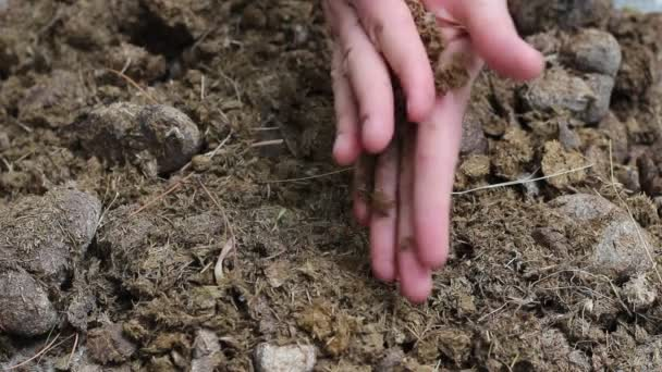 Using Manure Home Garden Composting Horse Manure Gardener Hands U2014 Stock  Video