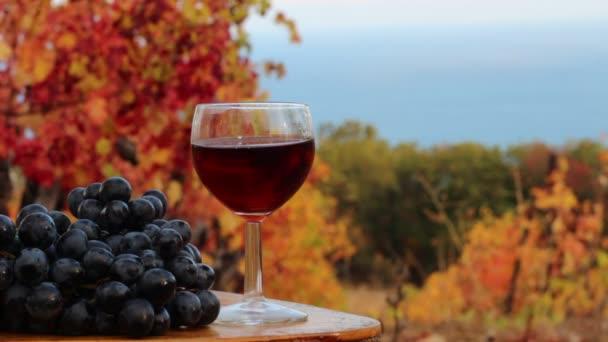 Sklenice červeného vína a hroznů. Pobřeží vinice. Podzimní ochutnávka vín. Vinice a vinařství. Vinné hrozny