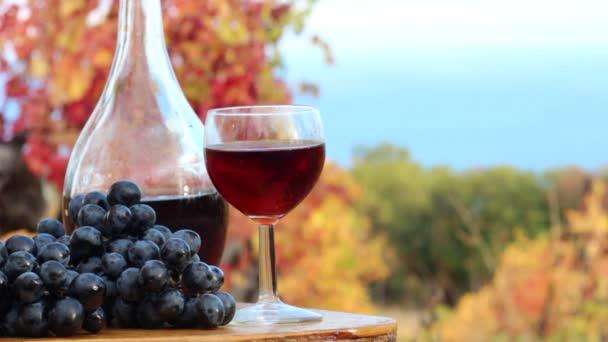 Vinařství. Pobřeží vinice. Sklizeň hroznů. Vinné hrozny