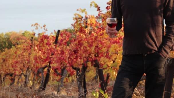 Vinařství. Muž ochutnávka vína. Vinice a vinařství. Vína z podzimu