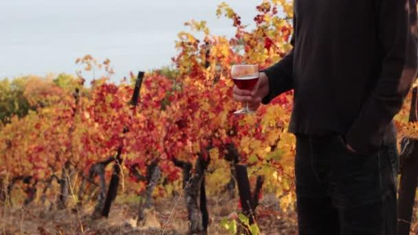 Vinař, ochutnávka červeného vína. Podzim na vinici. Vinice a vinařství