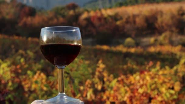 Sklenice červeného vína. Vinice na podzim