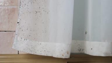 Zwarte Schimmel Muren Schimmel Huis — Stockvideo © Fevziie #195115090