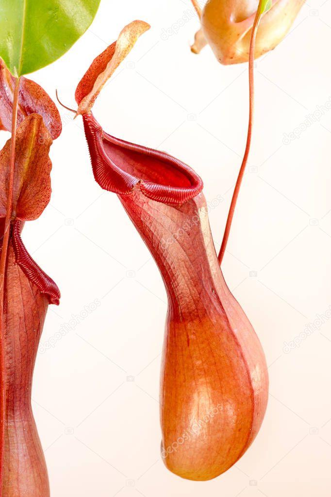 Carnivorous plant view