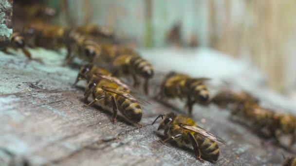 Viele Honigbienen fliegen in der Nähe ihres Holzbeutels zusammen und krabbeln daran entlang.